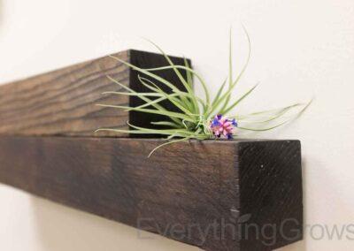 interior-plantscape-01