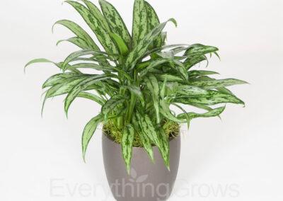indoor-plants-01