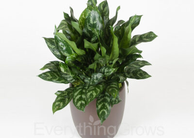 indoor-plants-02