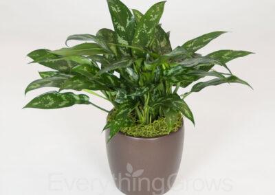 indoor-plants-04