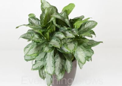 best-indoor-plants-01