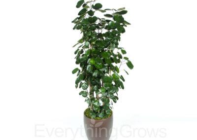 best-indoor-plants-02