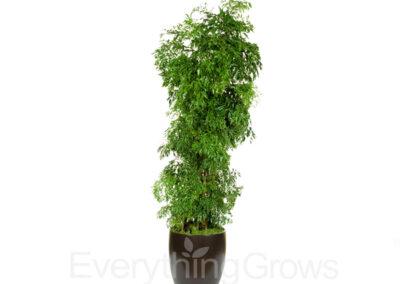 best-indoor-plants-03