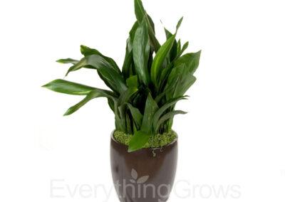 best-indoor-plants-04