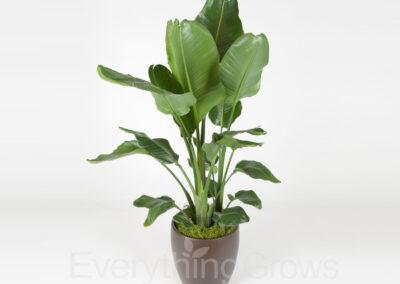 inside-plants-01
