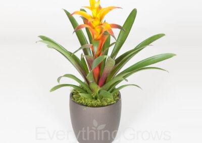 inside-plants-03