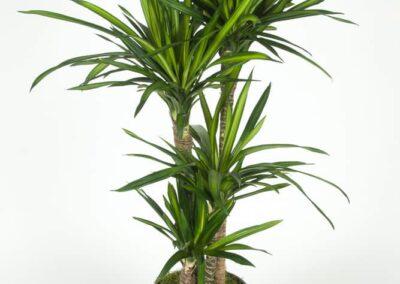 inside-plants-05