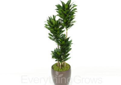 indoor-plants-07