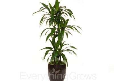 indoor-plants-08