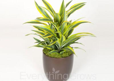 best-indoor-plants-05