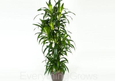 best-indoor-plants-06