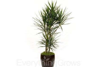 best-indoor-plants-07