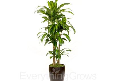 best-indoor-plants-08
