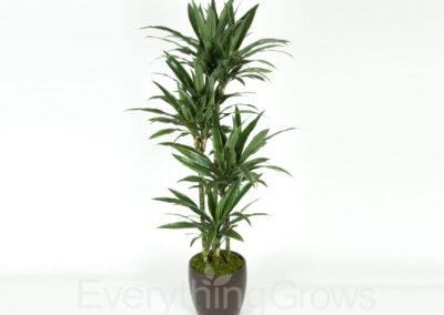 inside-plants-06