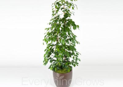 inside-plants-08
