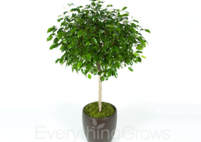 indoor-plants-09