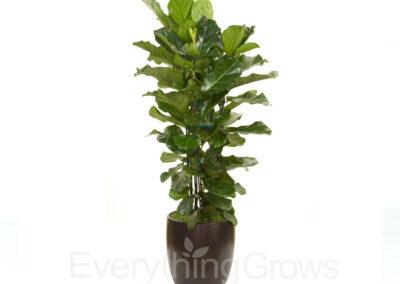 indoor-plants-10
