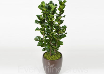 indoor-plants-11