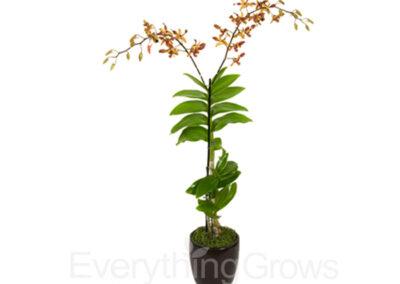 best-indoor-plants-09