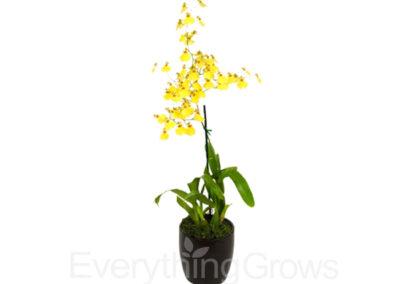 best-indoor-plants-10