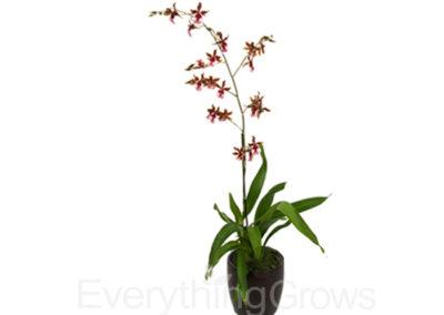 best-indoor-plants-11