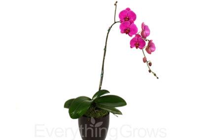 best-indoor-plants-12