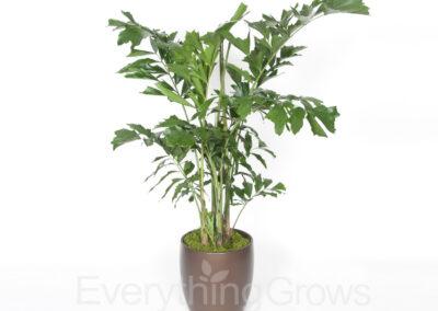 inside-plants-11