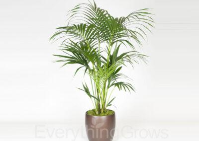 inside-plants-12