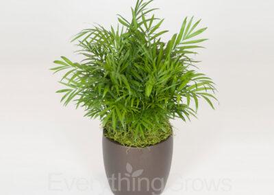 indoor-plants-13