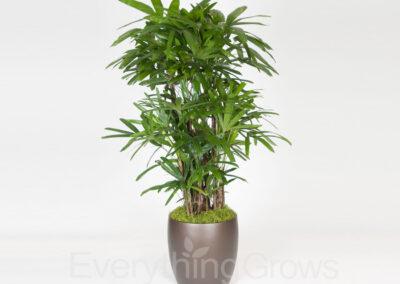 indoor-plants-14