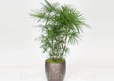 indoor-plants-15