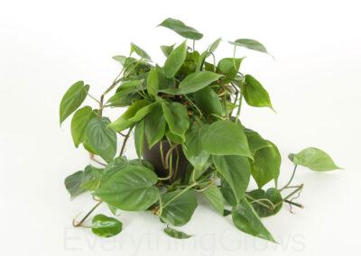 indoor-plants-16