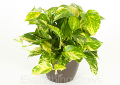best-indoor-plants-14