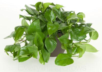 best-indoor-plants-15