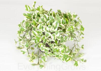 best-indoor-plants-16