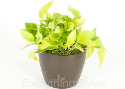 best-indoor-plants-13
