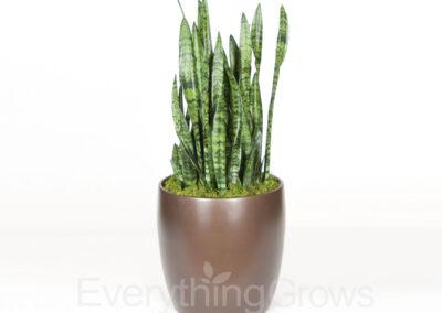 inside-plants-13