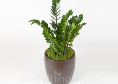 inside-plants-15