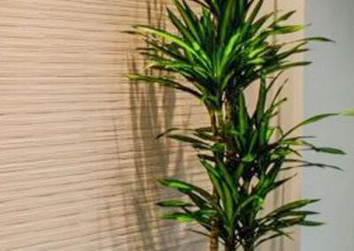 interior-plantscape-05