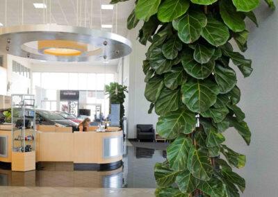 interior-plantscape-07