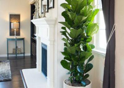 interior-plantscape-08