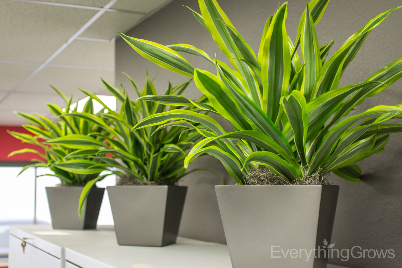 interior-plant-company
