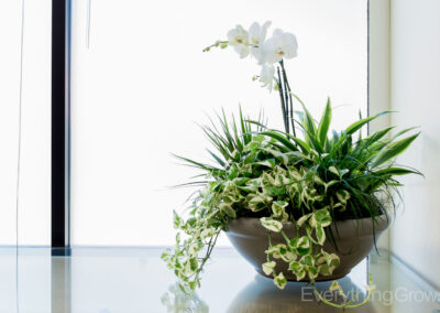 interior-plantscape-16