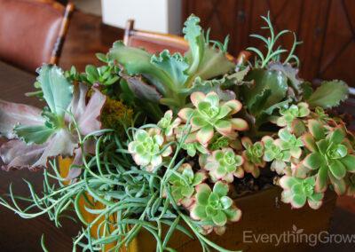 interior-plantscape-14