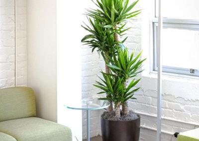 interior-plantscape-15