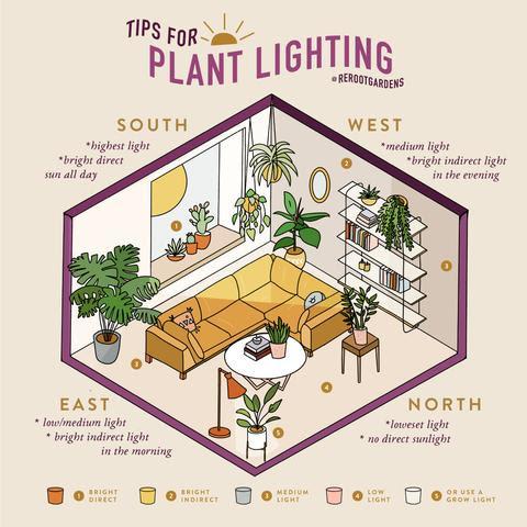 Plant Lighting
