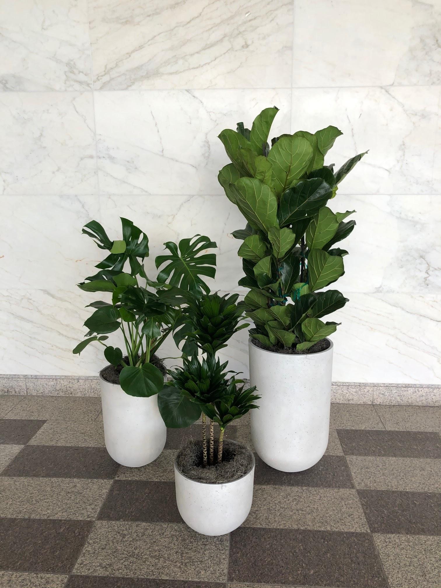 great office plants