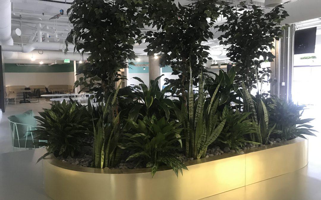 Lush living indoor plants