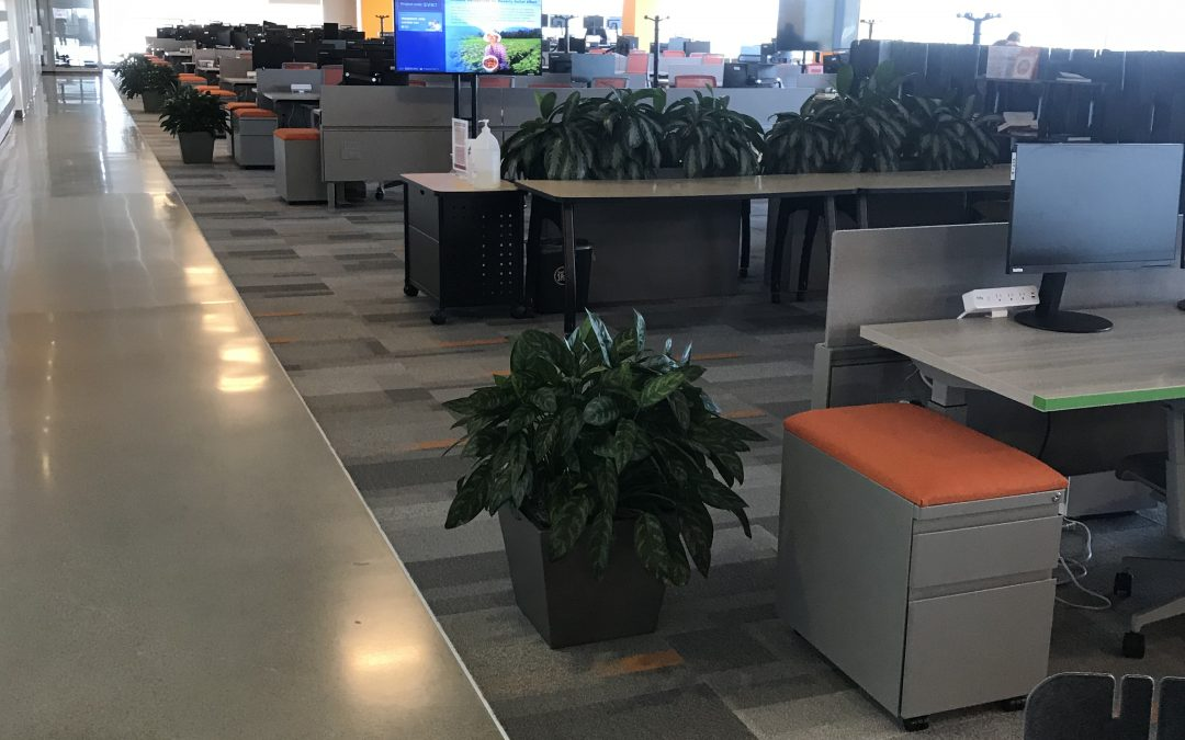Lonely Office Plants