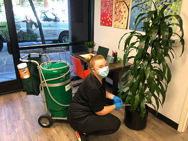 Why Offices Need Interior Landscape Technicians
